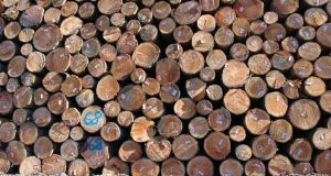 How Green Is Your Building's Wood?