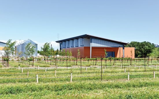 The Jess Jackson Sustainable Winery Building designed by Siegel & Strain Architects is part of the Research Winery and August A. Busch III Brewery and Food Science Laboratory (BWF) at the University of California, Davis. (Photo by Jasper Sanidad)